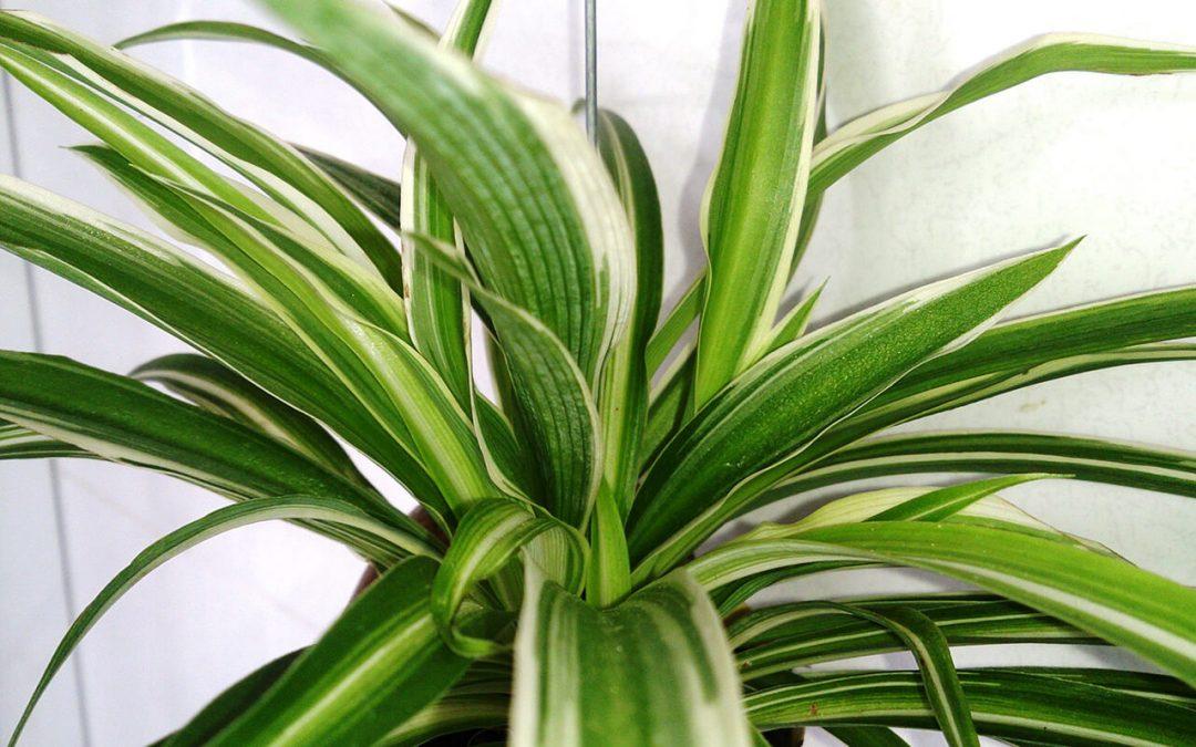 Improve Indoor Air Quality